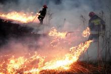 Kolejny pożar łąki mógł skończyć się tragicznie