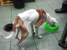 Szokująco chudy pies na ul. Korfantego