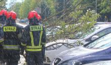 Drzewo przewróciło się na zaparkowane samochody