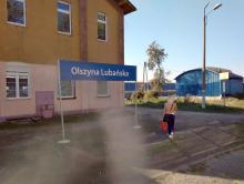 Olszyna niesłusznie Lubańska
