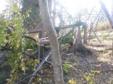 Nadleśnictwo Śnieżka także wprowadza zakaz wstępu do lasu