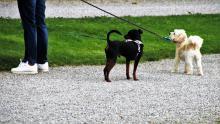 Ile za spacer z psem bez smyczy?