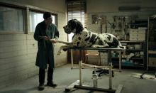 """Festiwalowy pokaz specjalny filmu """"Dogman"""" w reż. Matteo Garrone, rewelacji tegorocznego festiwalu w Cannes, w środę, 20 lutego."""