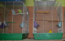Uwolnił papugi