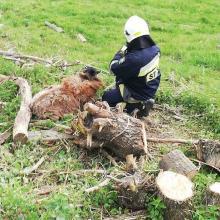 Strażacy uratowali owcę. Ale co z pozostałymi?