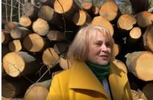 Apel posłanki: Ratujmy polskie lasy